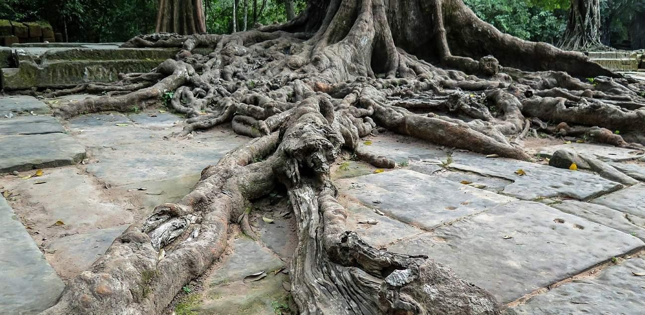 cambodia_ta_phrom_Main