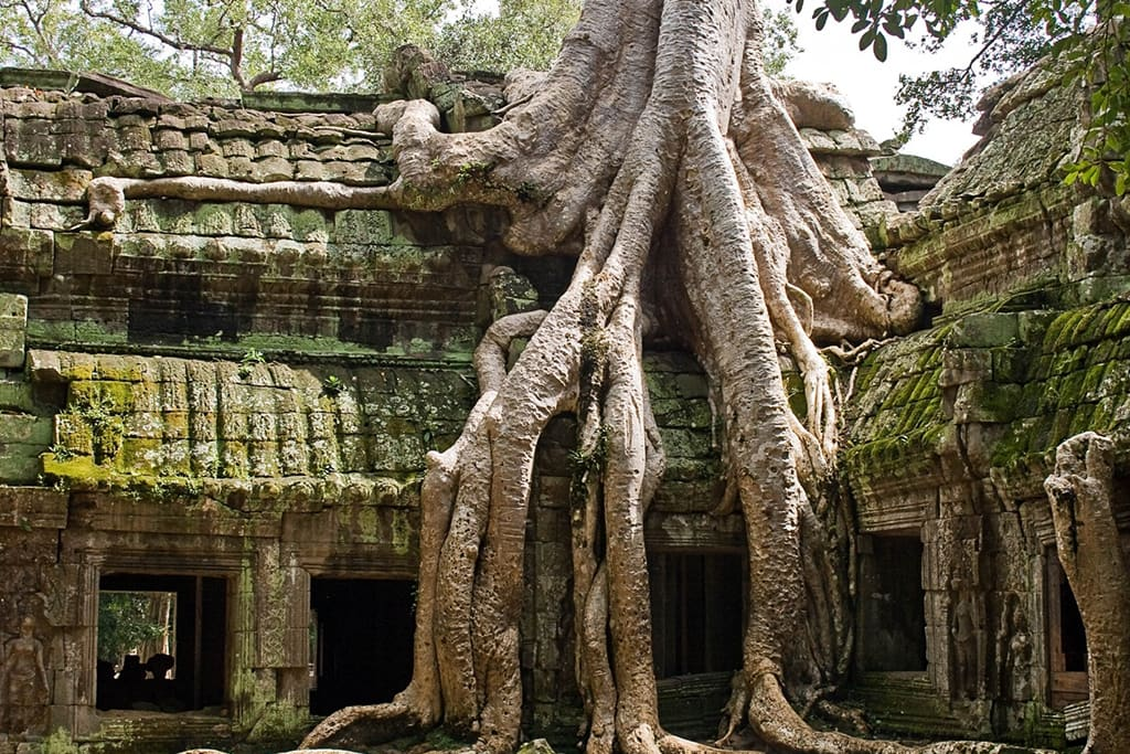 ta-prohm-jungle-temple